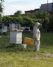 Welcome Saint Louis Beekeepers - STL Bees - St  Louis, Missouri